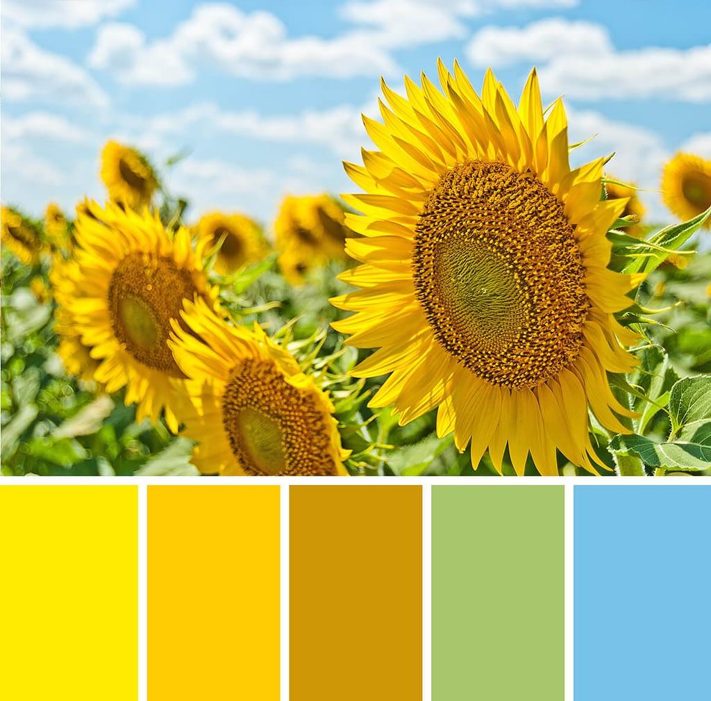 kleureninspiratie: zonnebloemen